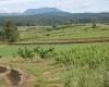 Vignes au proximité Grillou Ardèche